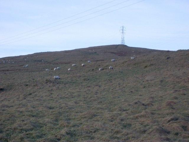 Sheep grazing on Cochno Hill