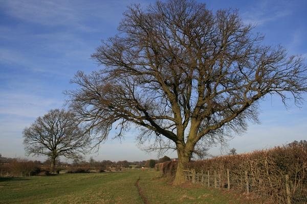 Trees along Centenary Way