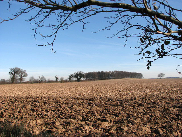 View across field towards unnamed woodland
