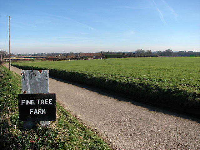 Access road to Pine Tree Farm