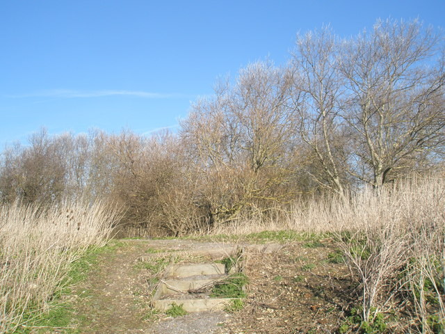 Thicket opposite the dredging depot