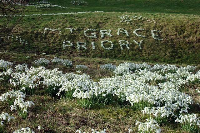 Mount Grace Snowdrops