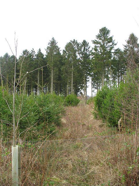 Woodland by Mounthooly