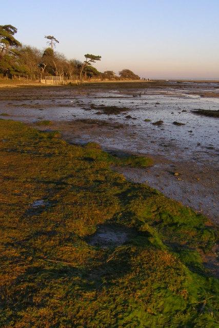 Tidal mud, Boldre Foreshore nature reserve