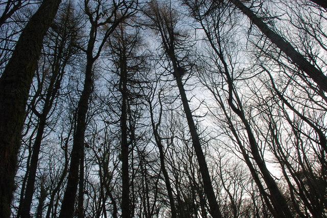 Coed - Trees