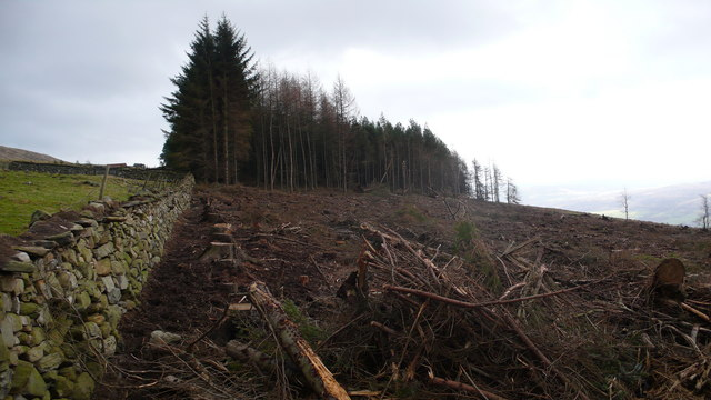 Felled forestry