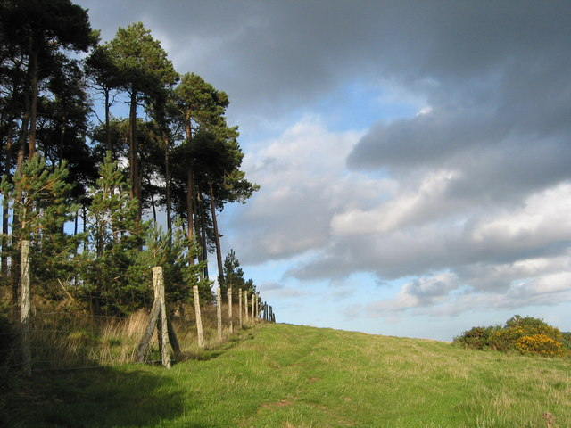 Trees at the top of Bromlow Callow