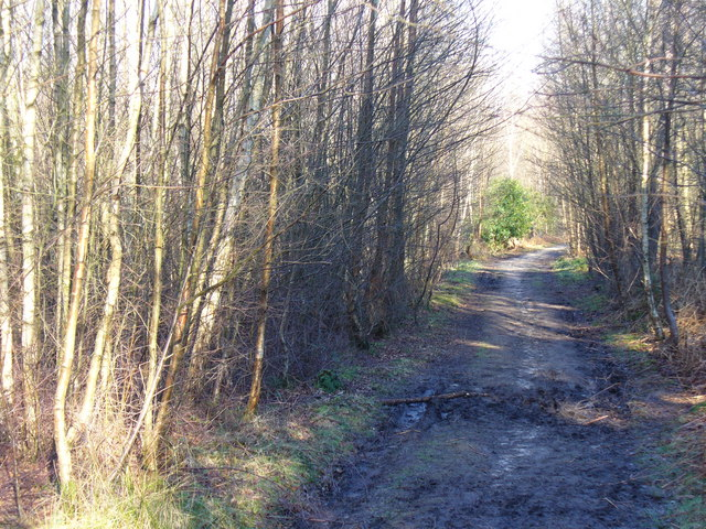 Footpath in Boundless Copse
