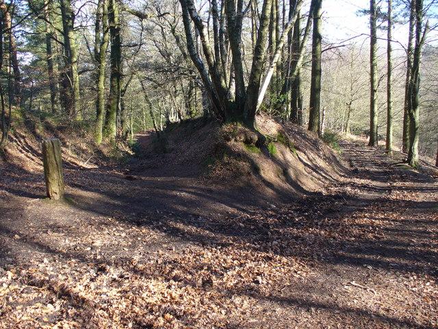 Bridleway Fork on Gibbet hill