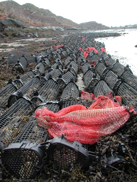 Oyster Baskets Faodhail Dhubh