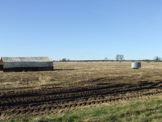 Pig fields