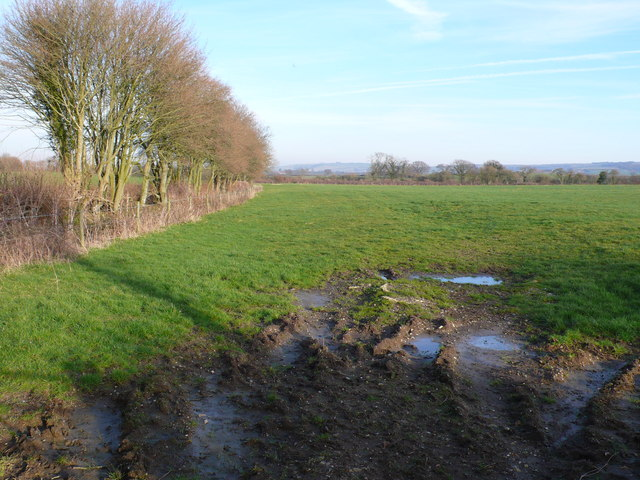 Field and hedgerow near Pulham, Dorset