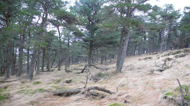 Woodland on Weem Hill