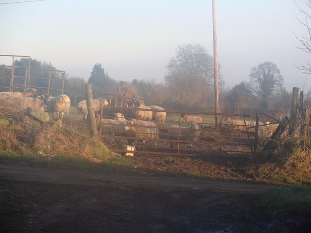 Feed time as the fog lifts