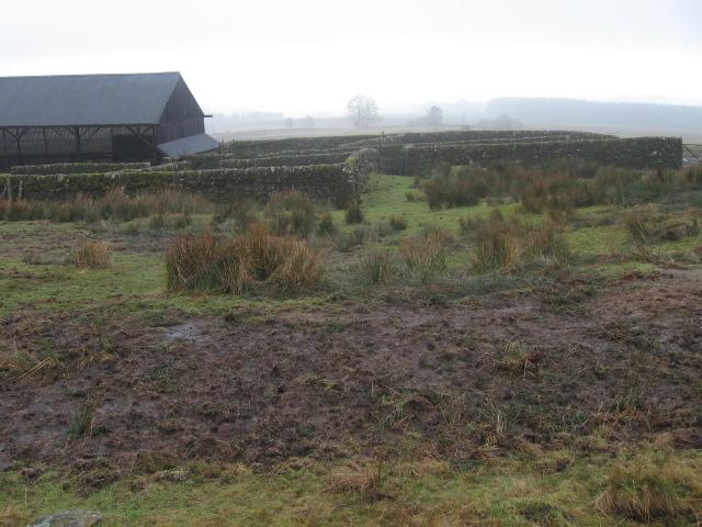 Barn and sheep enclosures near Muirhead
