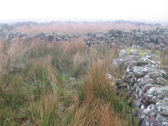 Sheepfold near Shiel Burn
