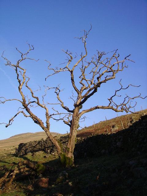 Dead Tree, Borrow Beck