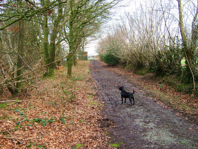 Footpath and track