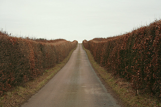 Winter hedge along the old military road by Newstead Farm