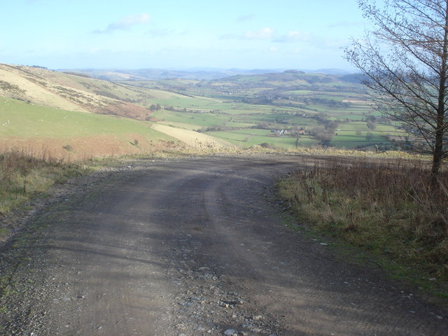 Forestry track in Cwm Broadwell Wood