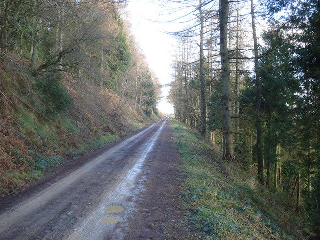 Forest Track in Cwm Broadwell Wood