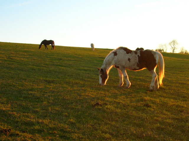 Early Evening Grazing