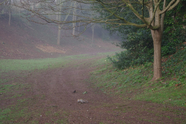 Rougemont Gardens, Exeter