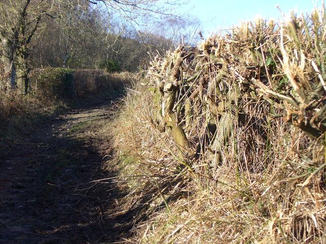 Bridleway near Keffold's Farm