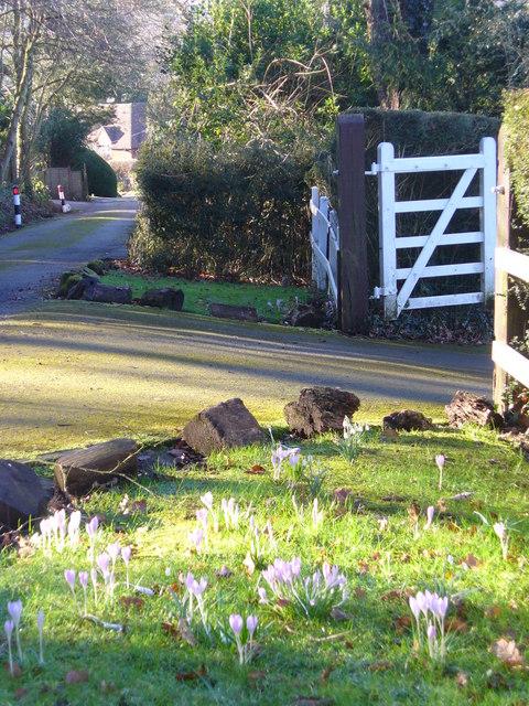 A Grayswood Lane