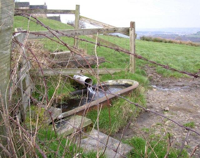 Spring and trough, Steele Lane, Barkisland