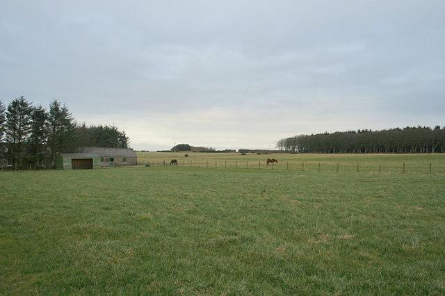 Horses in a field by Rosieburn