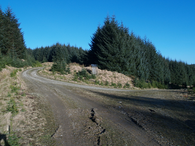 Track junction, Upper Howcleuch Forest