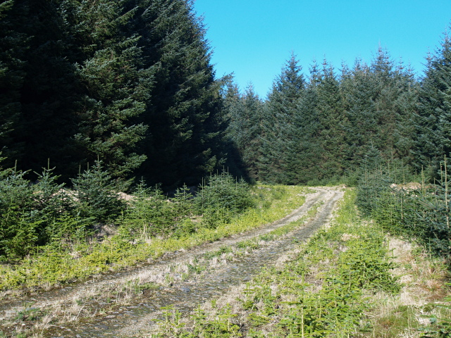 Forestry road, Nap Hill