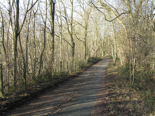 The road to High Woods