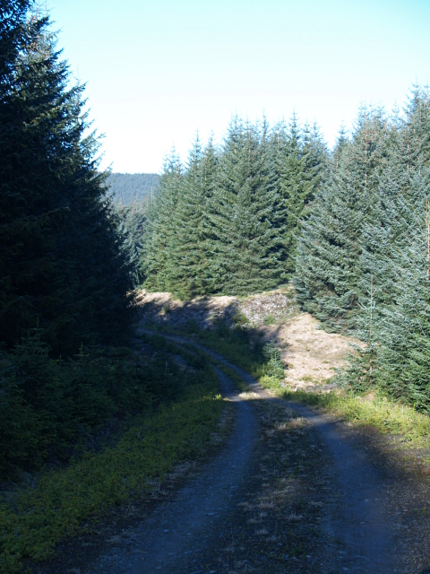 Forestry road, Middle Rig
