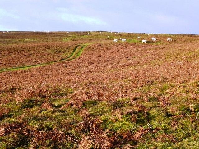 On Llanbedr Hill