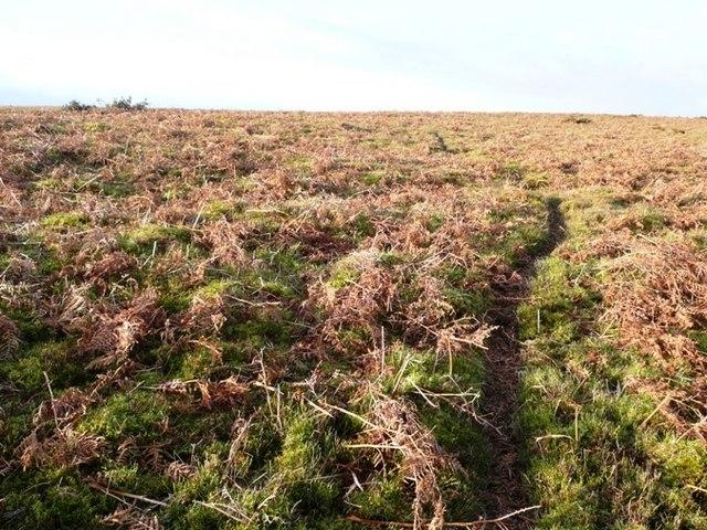 Towards Llanbedr Hill
