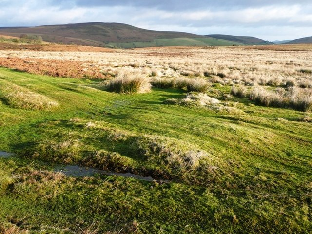 Moorland east of Llanbedr Hill