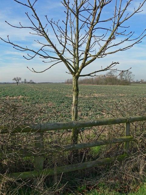 Farmland next to Crow Lane, Leicestershire