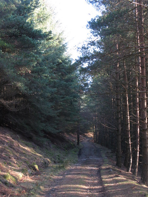 Track through Beldon End Plantation