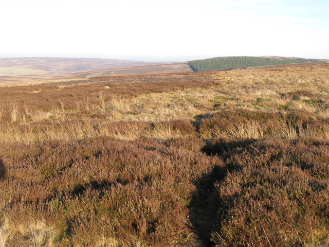 Path across moorland north of Riddlehamhope