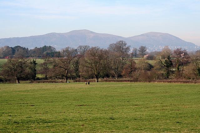 Horse Pasture near Hanley Hall