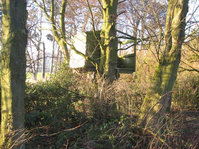 Tree house at North Farm, Whalton