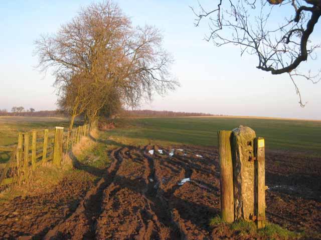 Mucky gateway near Penny Hill Farm