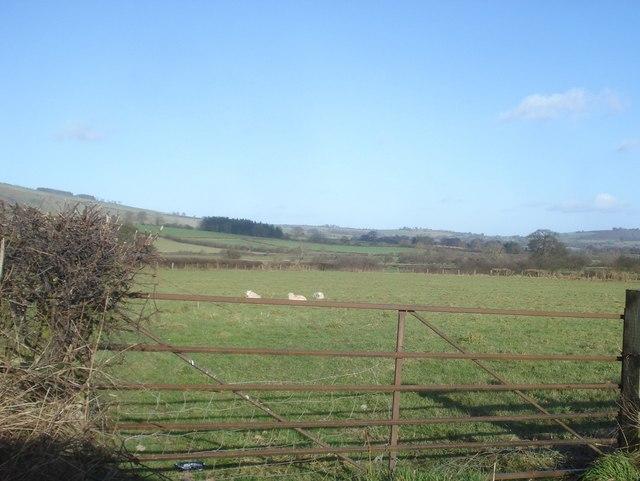 Sheep pasture east of New Radnor