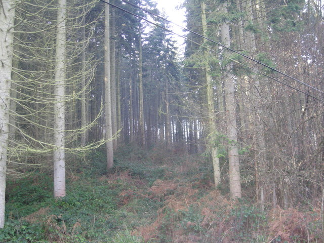Woodland known as 'The Wilds'