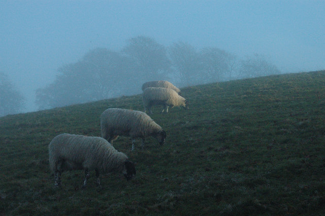 Grazing in the mist
