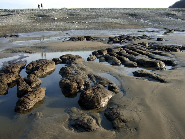 Drowned forest at low tide