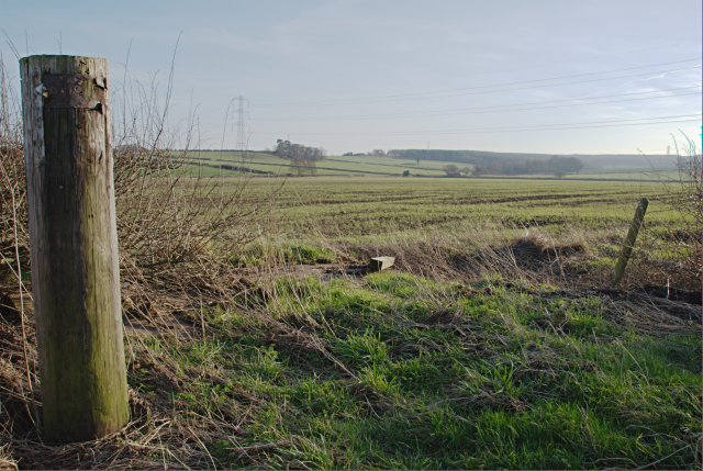 Field near Ingleby