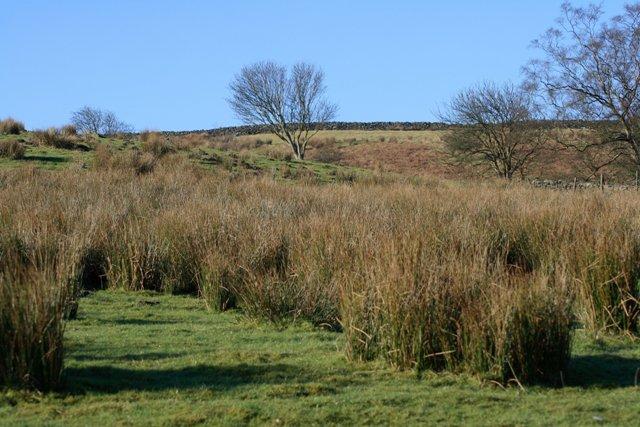Rough Pasture Hartoft Moor